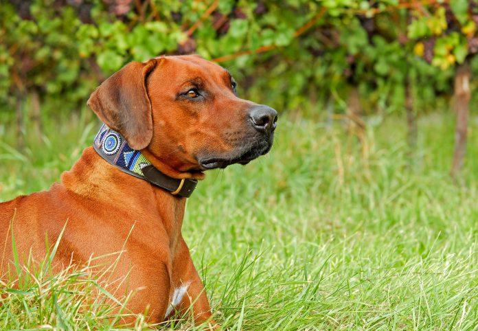 Dog witn collar