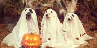 Pumpkin ghost dog