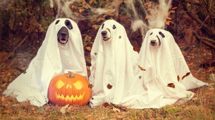 Pumpkin ghost dog