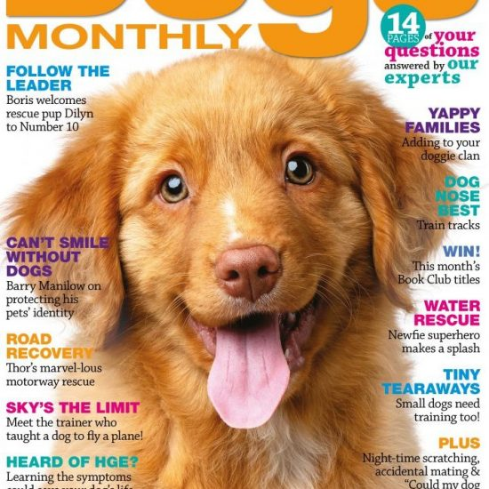 Dogs Monthly November