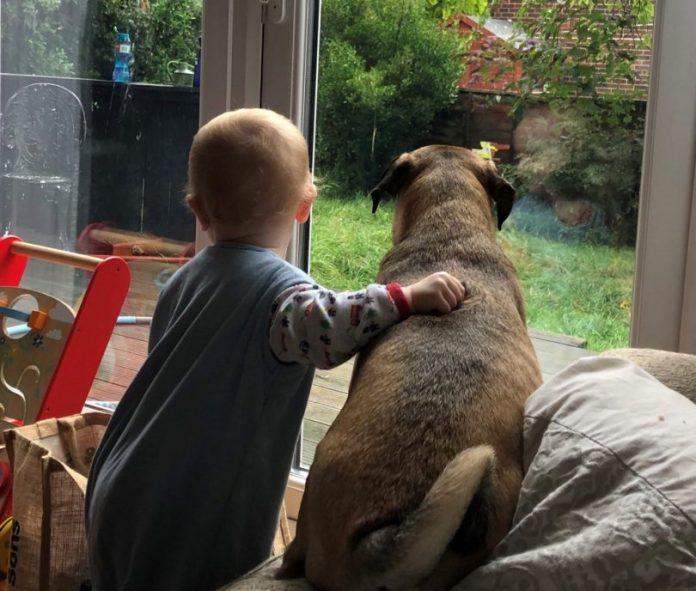 rescue dog potato