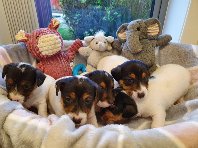 puppies need names