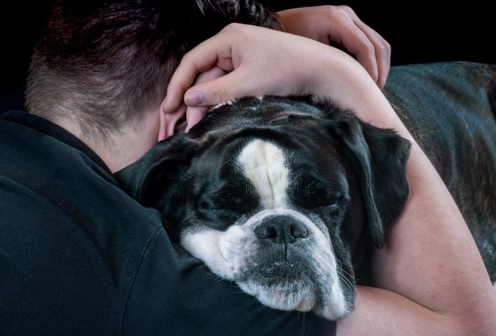 mental health and pets