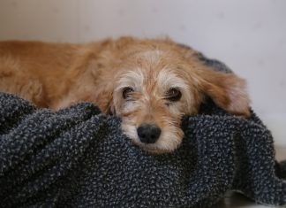 A study will look into coronavirus infections in pets