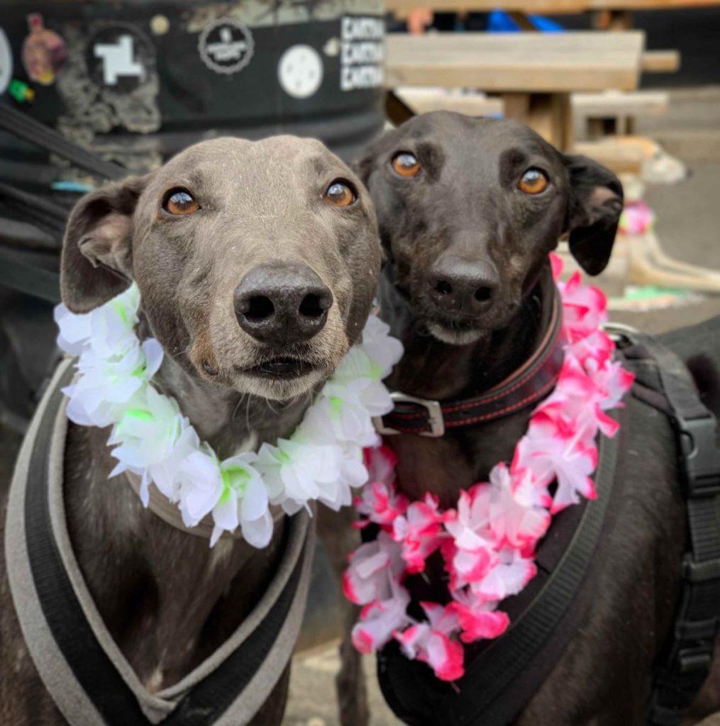 great global greyhound walk participants