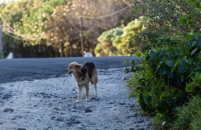 Summer months see a peak in pet abandonments