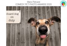 Comedy Pet Photo Awards winner