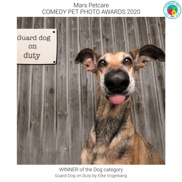 Comedy Pet Photo Awards winner