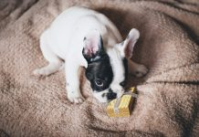 Potential puppy buyers warned in run-up to Christmas