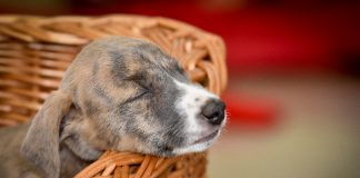 Puppies sleep more during the day