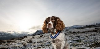 Max has received the PDSA Order of Merit