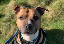 Bailey desperately needs a foster home