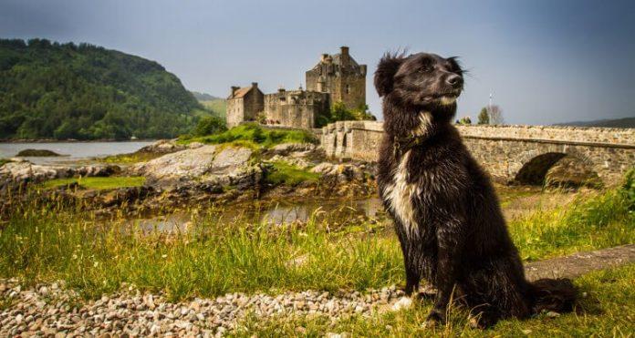 Best spring dog walks