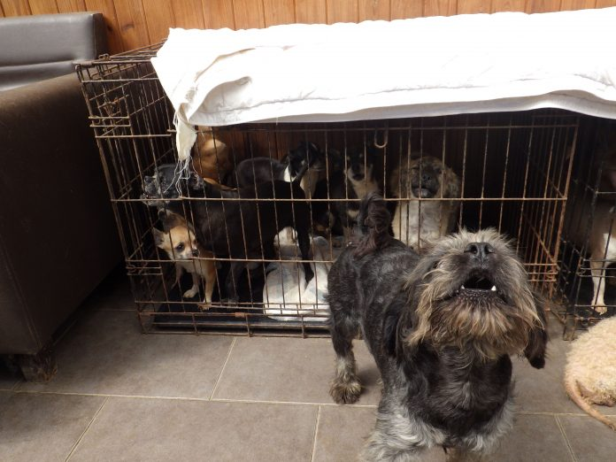 the breeder lost the appeal against the original sentence