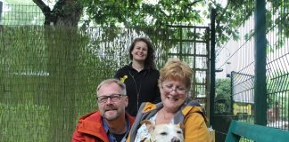 senior staffie adopted