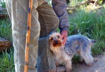 Older person with a walking stick stroking a small terrier dog