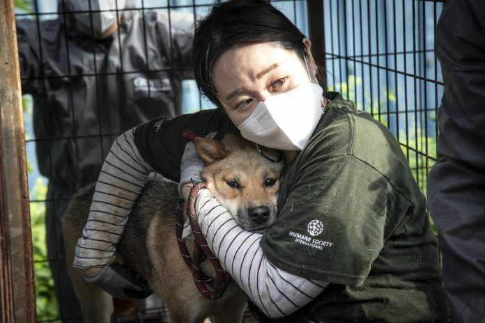 Saved from the dog meat farm
